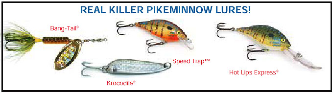 Fish tips article 11 northern pikeminnow for Best bait for salmon fishing in the river